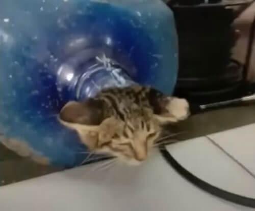 котёнок застрял в бутылке