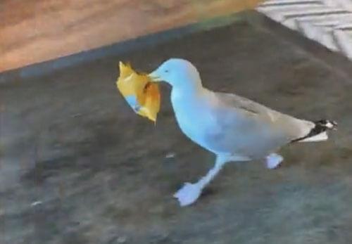 чайка украла чипсы из кафе