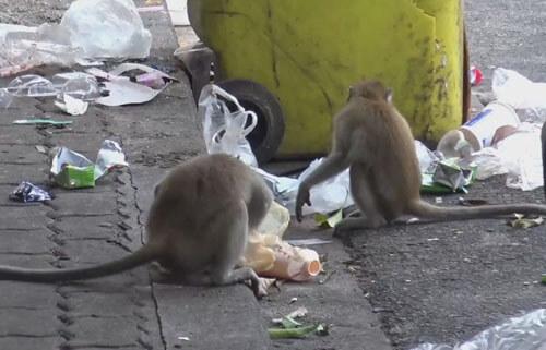 обезьяны пытаются захватить дом