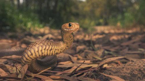 змея невзлюбила юношу