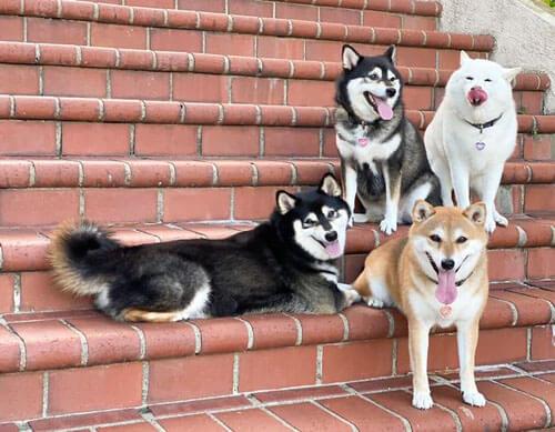 собака портит групповые фотографии