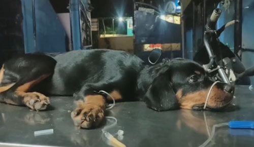 добряк спас жизнь щенку