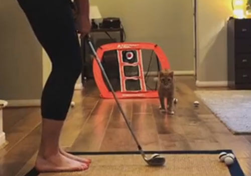 игра в гольф с кошкой