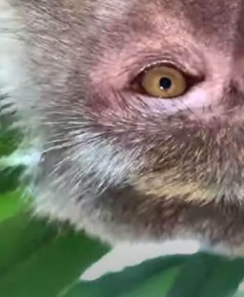 обезьяна похитила телефон
