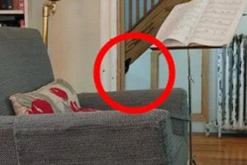 поиски невидимой кошки