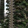 кошмарный экзотический лес