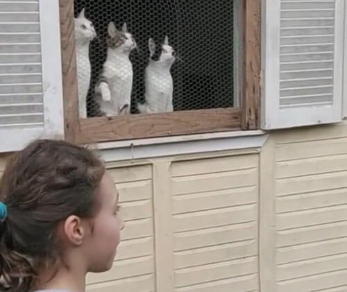 кошки смотрят на игру в мяч