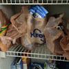 покупки из магазина в холодильнике