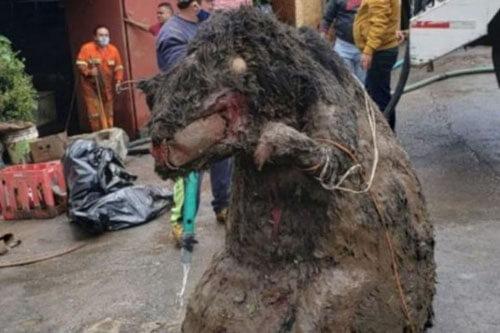 гигантская крыса в канализации