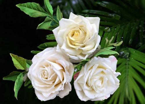 съедобные сахарные цветы