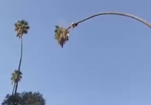 мужчина на слишком высокой пальме