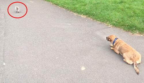 собака охотится на белку