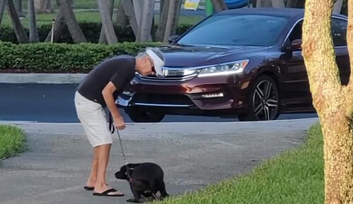 хозяин побил сбежавшую собаку