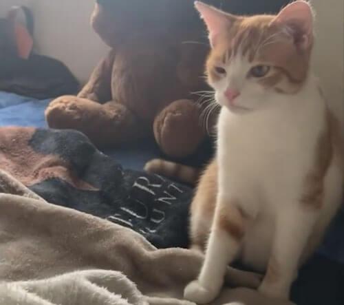 нападение одной кошки на другую