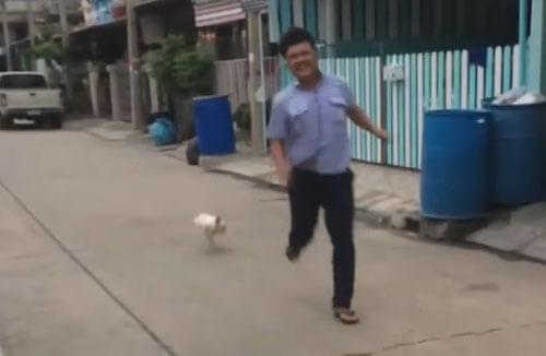 курица гонится за мужчиной