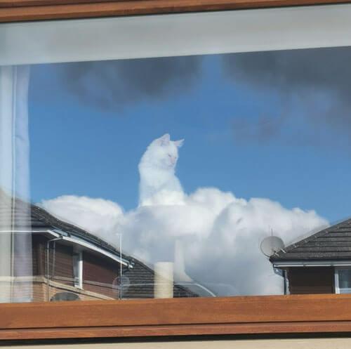 кот превратился в облачного бога