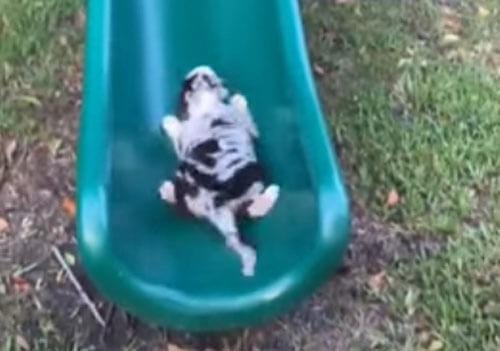щенок пытается покорить горку