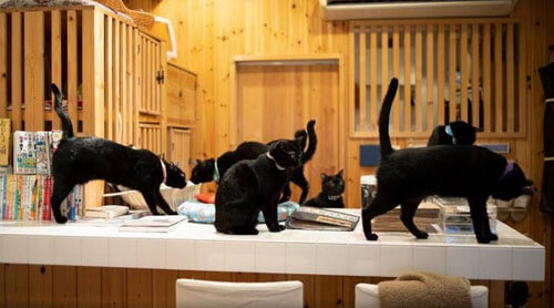 чёрные кошки живут в кафе