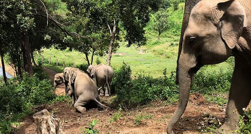слоны соскальзывают с горки