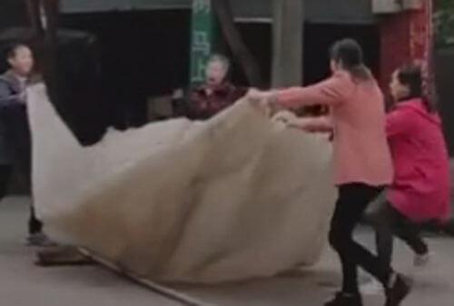 одеяло для спасения кошки