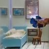 aquarium with a cozy bedroom