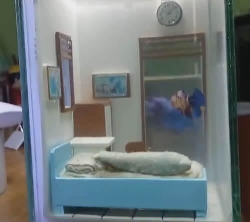аквариум с уютной спальней