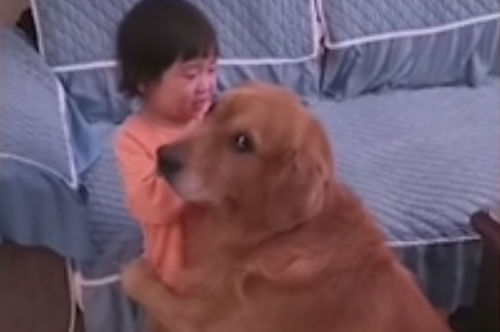 пёс защищает девочку от мамы