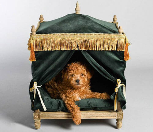 luxury beds for pets