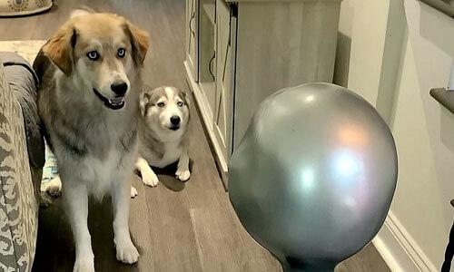 собаки и робот-инопланетянин