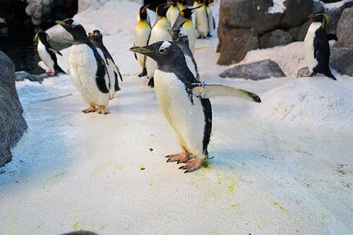 oldest female penguin