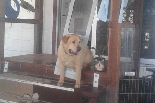 пёс растолстел и застрял в двери