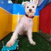 фотобудка для собачьих селфи
