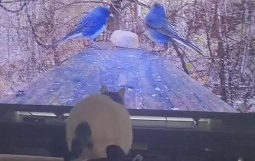 кошка ударилась об телевизор