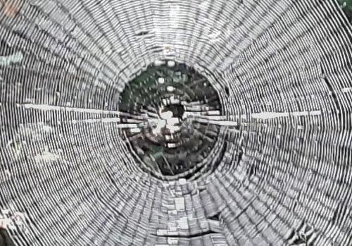 большая круглая паутина