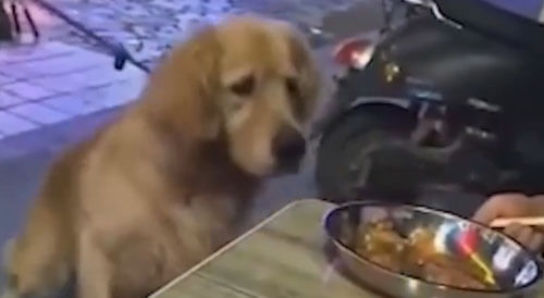 голодная собака на прогулке