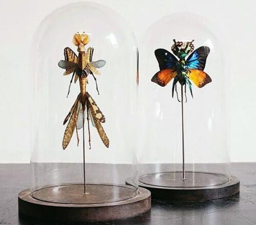 феи из мёртвых насекомых