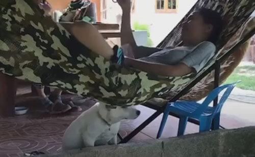 собака сидит под гамаком