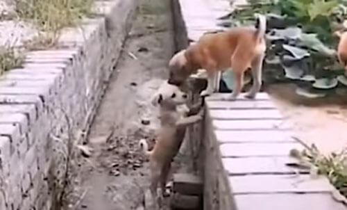 собака помогла подружке в канаве