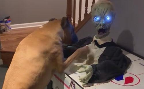 боксёр против куклы-зомби