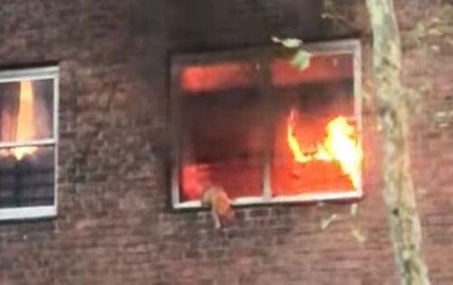 кошка спасается от пожара