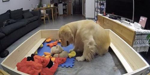 собака принесла щенкам игрушки