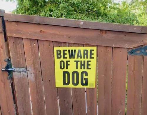 собаку нарядили привидением