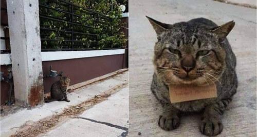 сбежавший кот влез в долги