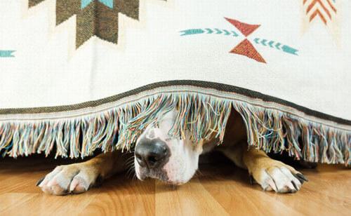 плохой запах в доме не из-за пса