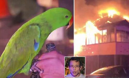попугай спас хозяина от пожара