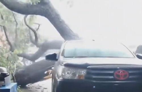 дерево повалилось на машину