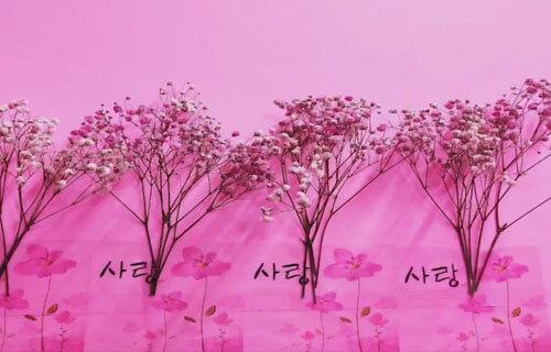 розовая комната в общежитии
