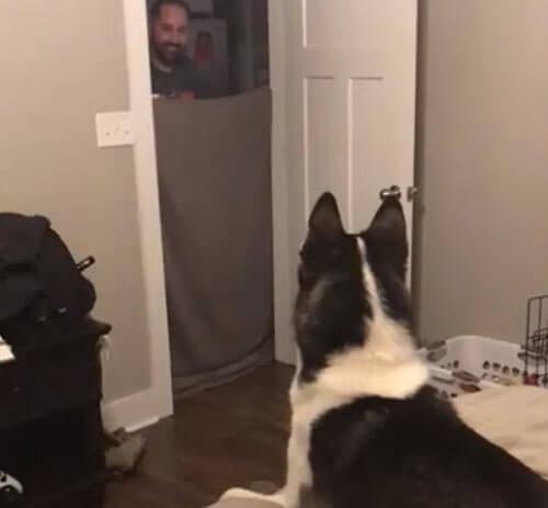 собака и хозяин-волшебник