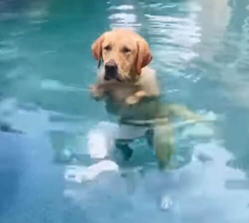 собака стоит в бассейне