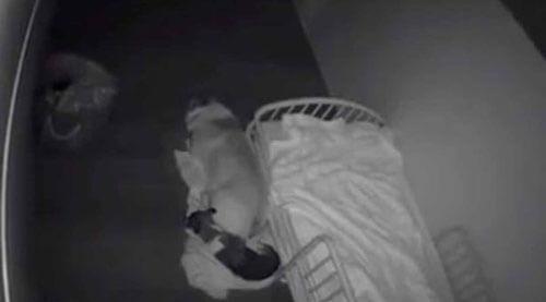 собаки не спят на кровати